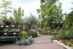outdoor_plants_wide1